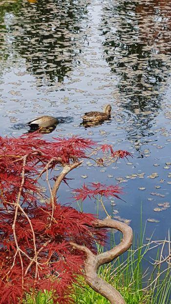 Ducks Beauty In Nature Lake EyeEmNewHere