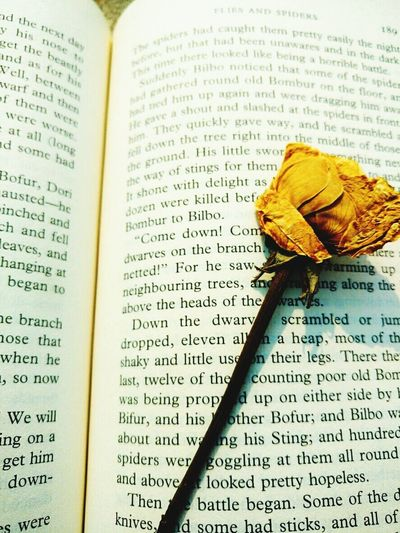each book has a story untold...a love unfound Love Eyeem Photography Books Rose - Flower Rosé Sunlight Page Day Book And Flowers EyeEmNewHere