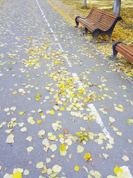 Nature_collection Enjoying Life Likeforlike #likemyphoto #qlikemyphotos #like4like #likemypic #likeback #ilikeback #10likes #50likes #100likes 20likes Likere [ Autumn Taking Photos First Eyeem Photo Nature