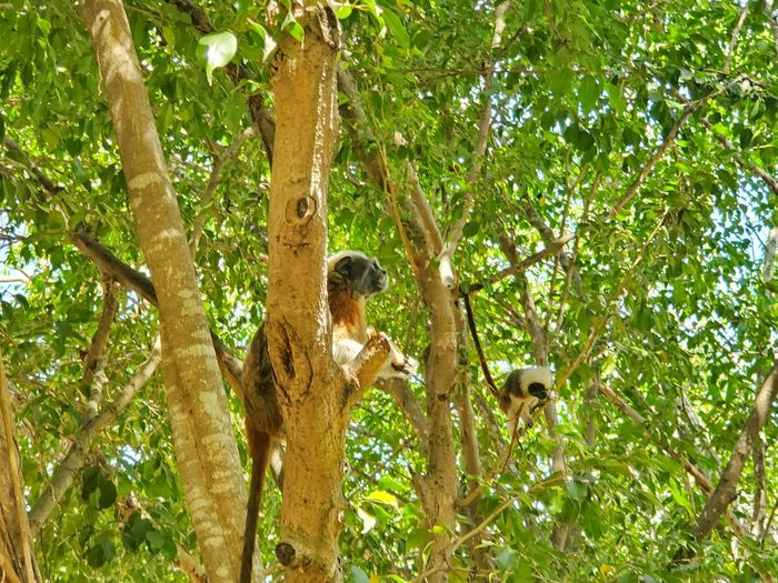 Monkey on tree in forest