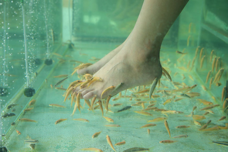 Low section of woman during fish pedicure