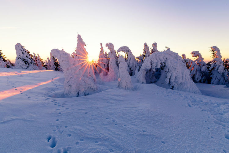 Cold Temperature Snow Winter Sky Beauty In Nature Nature Covering Tranquility Tranquil Scene Land White Color Sunset Scenics - Nature No People Plant Field Clear Sky Tree Frozen Powder Snow Harzmountains Harz
