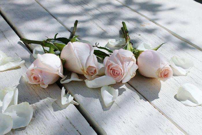 Roseporn Roses Flowers  Roses Rosas Rosas <3 Flores Rose🌹
