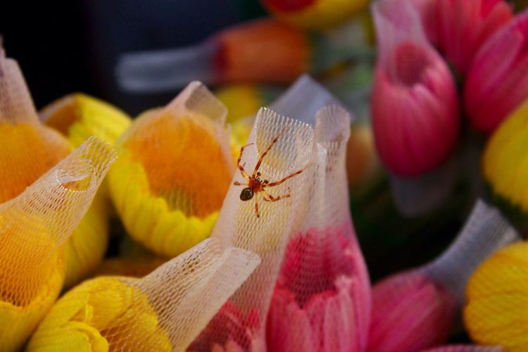 Spider On Net With Flowers