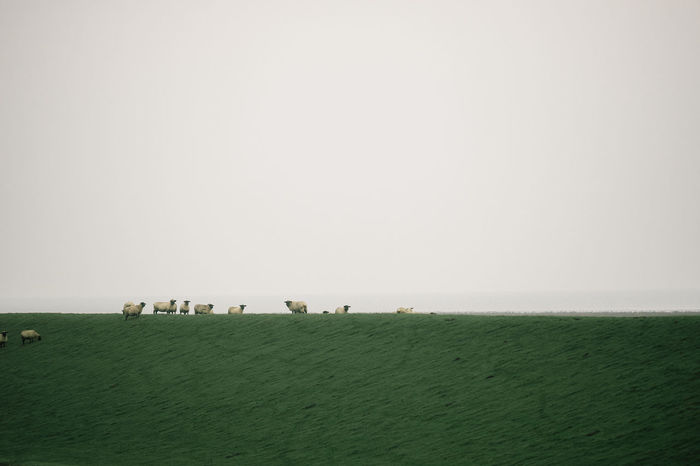 At the Sea Green The Week On EyeEm Animal Themes Animals In The Wild Beauty In Nature Bird Day Grass Landscape Large Group Of Animals Mammal Nature No People Outdoors Sheep Sheep🐑 Sky Togetherness