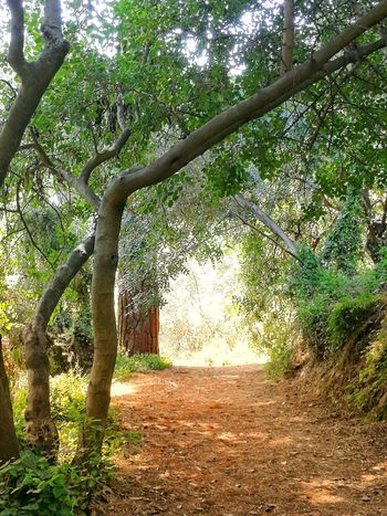 Tranquility No People Plants On The Wall Beauty In Nature Garden Forest Tree Branch Growing Woods Green Tranquil Scene Tree Trunk Sunrays Scenics Calm