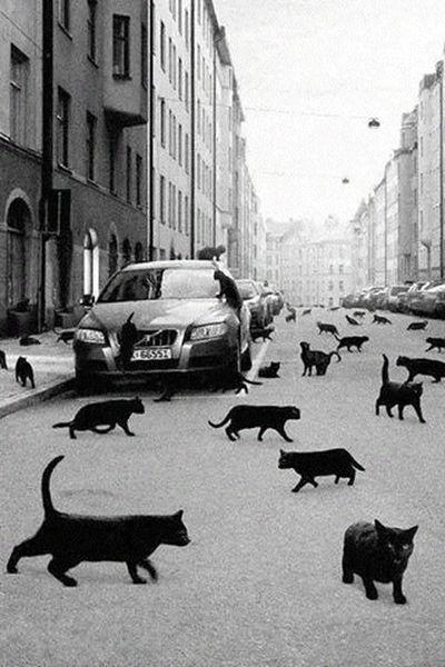 Black Cats Black Black & White