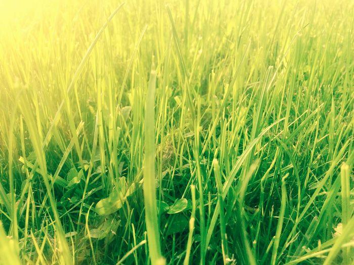 Walking Around Grass Spring