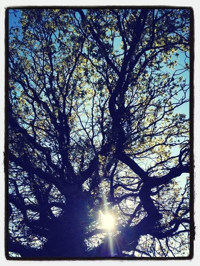 TreePorn