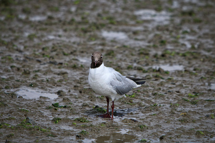Bird Standing On Mud