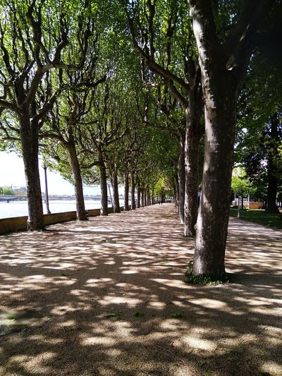 Platanus avenue... Shadow Shadows & Lights Trees Riverside Tree Plant Sunlight Nature Growth Shadow Tranquility Beauty In Nature No People Tranquil Scene Scenics - Nature Tree Trunk Trunk Water Land Day Outdoors