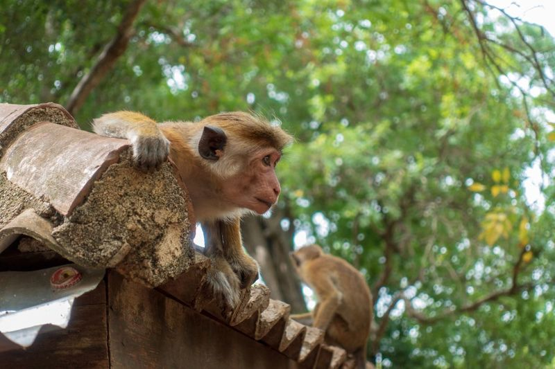 Low angle view of monkey sitting on tree
