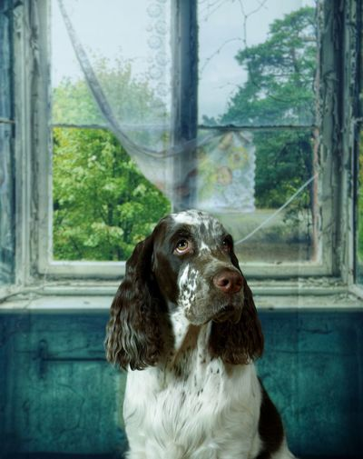 Dog One Animal Mammal Domestic Domestic Animals Pets Window Animal Indoors  No People