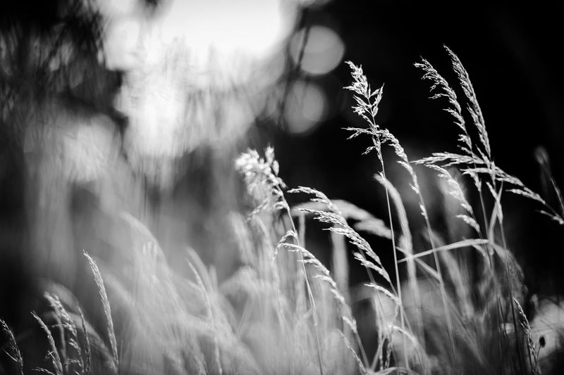 Blackandwhite EyeEm Selects Plant Growth Nature No People Beauty In Nature Day Tranquility
