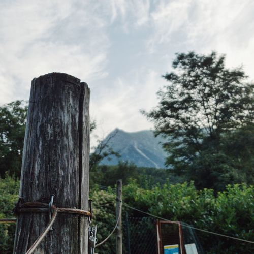Wooden fence by trees on mountain against sky