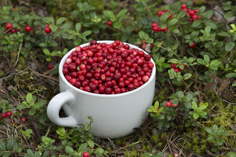 Close-up of berries in cup by plant