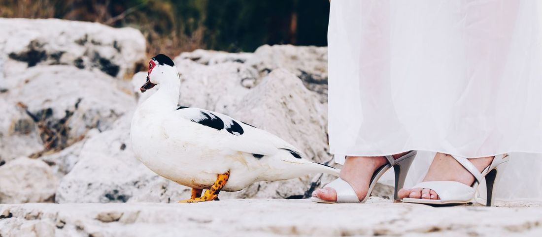 Human Leg Bird Nature Outdoors Animal Themes Close-up Low Section People Human Body Part EyeEm EyeEm Selects Weddinginspiration Wedding Eyestoriestudio Wedding Party Summervibes Canon 5d Mark Iv Weddingseason Weddingphotography Weekend Chilling Pouplar Duck Popular Photos Nature