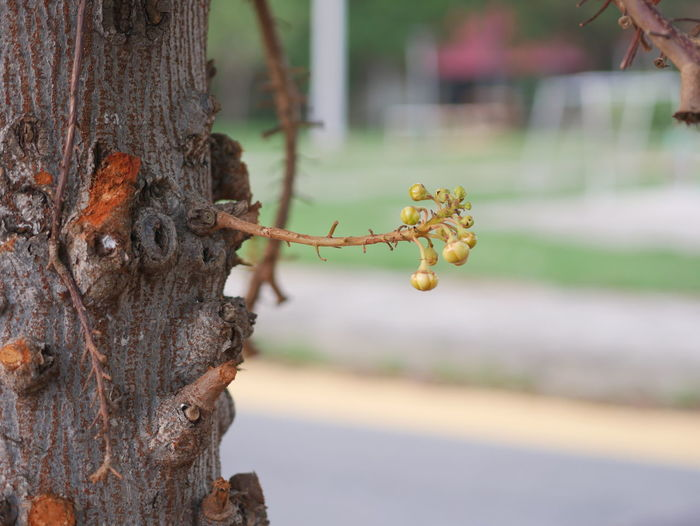Tree view Focus On Foreground Plant Tree Trunk Tree Trunk Close-up Day No People Nature Outdoors Food Food And Drink Fruit Growth Healthy Eating Wood - Material Selective Focus Freshness Beauty In Nature Plant Bark