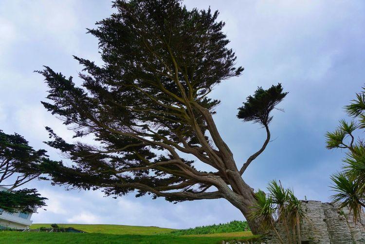 TreePorn Blown Wind