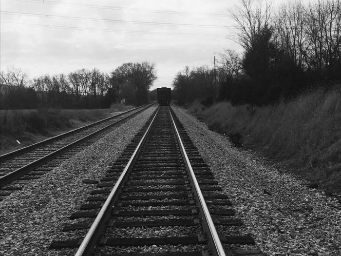 Railroad tracks along trees and plants