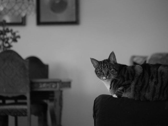 Portrait of cat relaxing at home