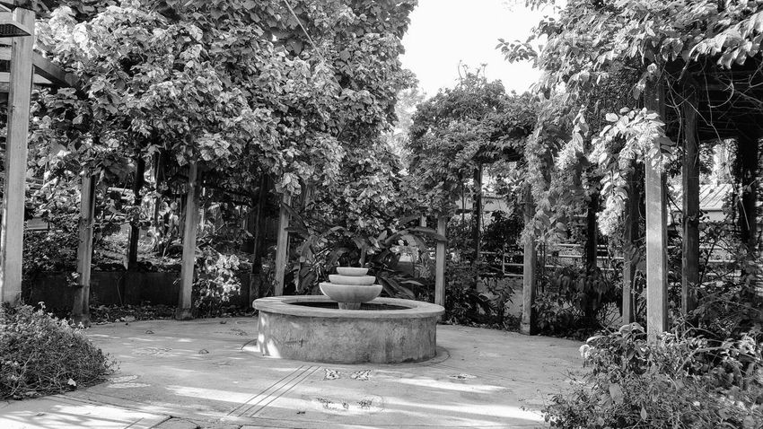 Gem in the middle of the zooGrowth Sunlight Beauty In Nature No People Pottery Nature Tranquility Tree Outdoors Day Plant Fountain Black And White