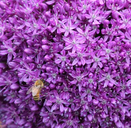 Where's Waldo? Purple flower Full Frame Bee Close-up Beauty In Nature
