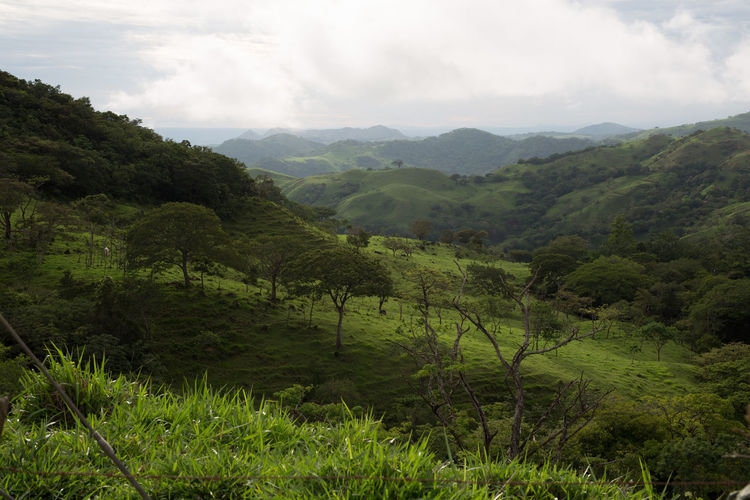 Wooded hill range