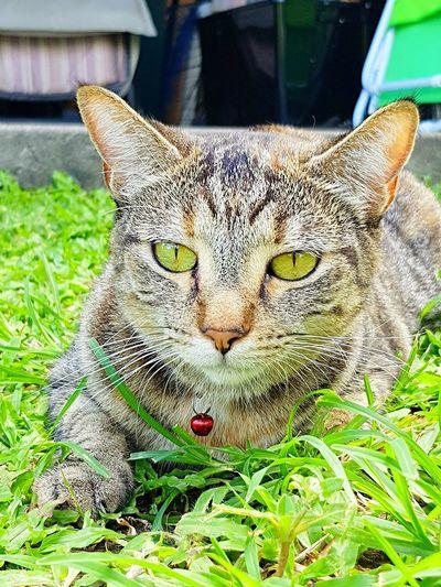 green eyes,