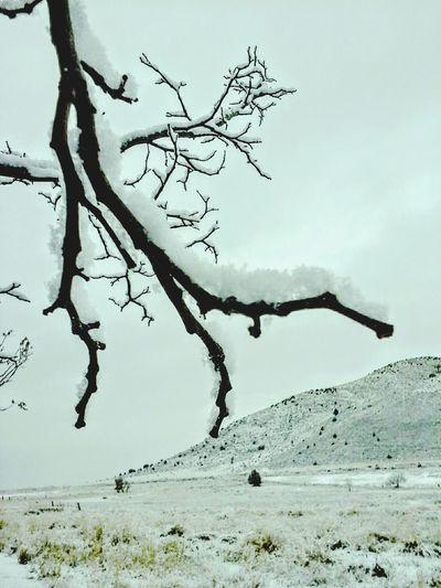 It's Cold Outside ,snow covered branches early in the morning . Snowscape , Snow Covered , Frozen Photography w, Winterscapes