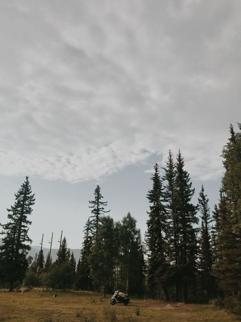 EyeEmNewHere No People Travel Motorcycle Motorcycles Colorado Beauty In Nature Tree Plant Sky Nature Cloud - Sky Transportation Mode Of Transportation Land Vehicle Landscape Outdoors