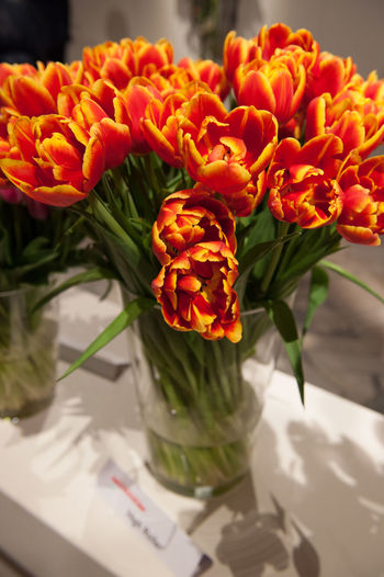 Close-up of flowers in vase
