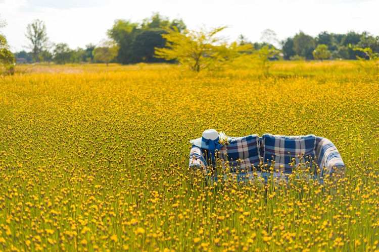 Agriculture Beauty In Nature Day Field Flower Flower Head Fragility Freshness Full Length Growth Men Nature Occupation Oilseed Rape One Man Only One Person Outdoors Plant Protective Workwear Real People Rural Scene Sky Tree Working Yellow