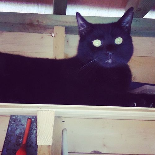 Dads cat Rosierab enjoying the shed Toplad