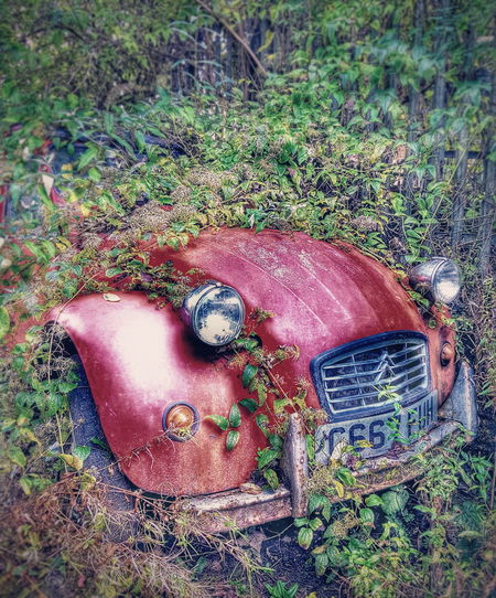 Old Car Old Car Junkie Buried Cars Citroen 2cv Red Car Perspectives On Nature