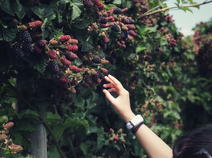 Midsection of woman holding fruit against plants