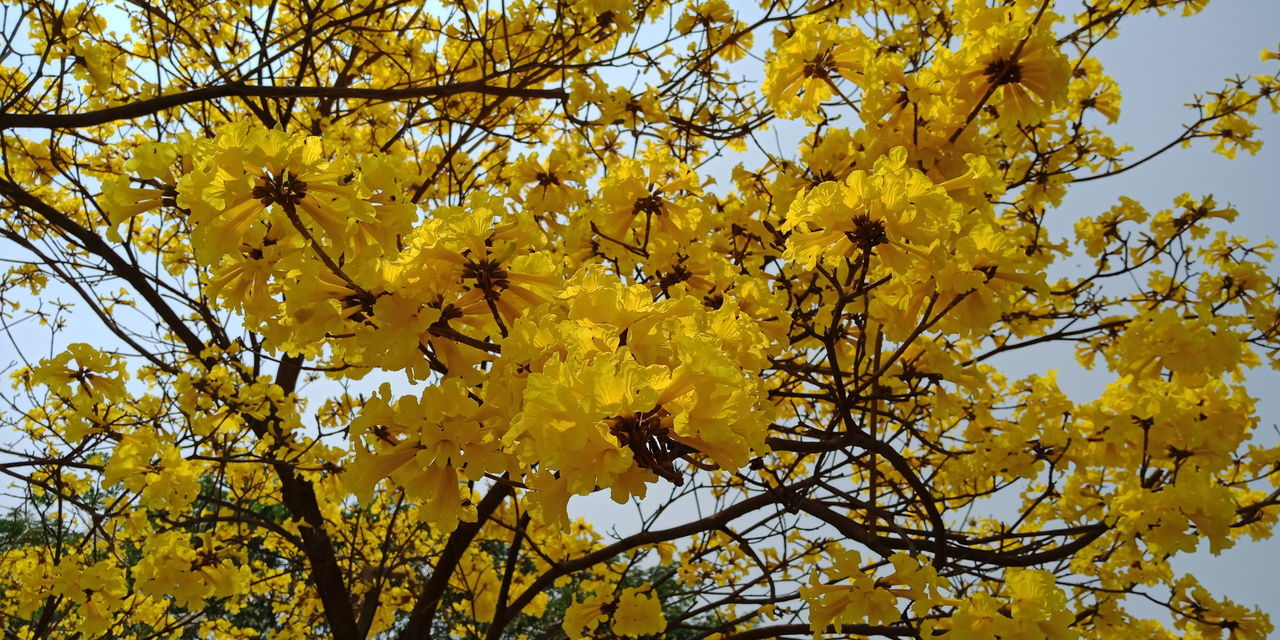 Tree Flower Branch Yellow Autumn Sky