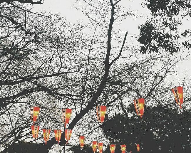Ueno Park Lights Eyeem Uenopark 2016 EyeEm Japan EyeEM Tokyo EyeEm Gallery Tokyouenospring2016 Tokyohanami2016 Ueno Park Spring 2016 Tokyospring2016 Uenopark2016 Dusk Tokyoduskspring2016