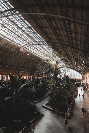 Ceiling Architecture Indoors  Built Structure Plant Greenhouse Roof Real People Day Tree Station Train Atocha Garden City Urban