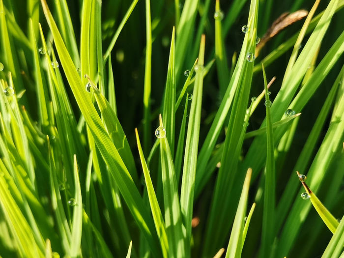 Close-up of grass growing in field