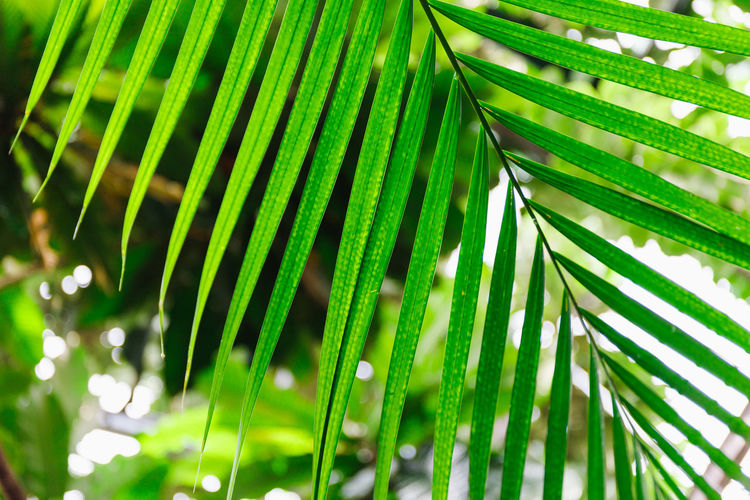 Green Color Palm Tree Leaf Palm Leaf Growth Plant Beauty In Nature No People Close-up Plant Part Nature Day Tree Focus On Foreground Outdoors Frond Natural Pattern Tropical Climate Freshness Pattern Leaves Bamboo - Plant Palm