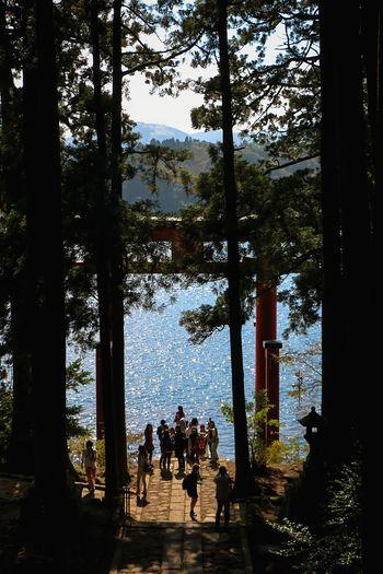 Learn & Shoot: Leading Lines Countryside Ashinoko Ashino Lake Lakeside TreePorn Tall Trees Hugging A Tree EyeEm Nature Lover EyeEm Best Edits