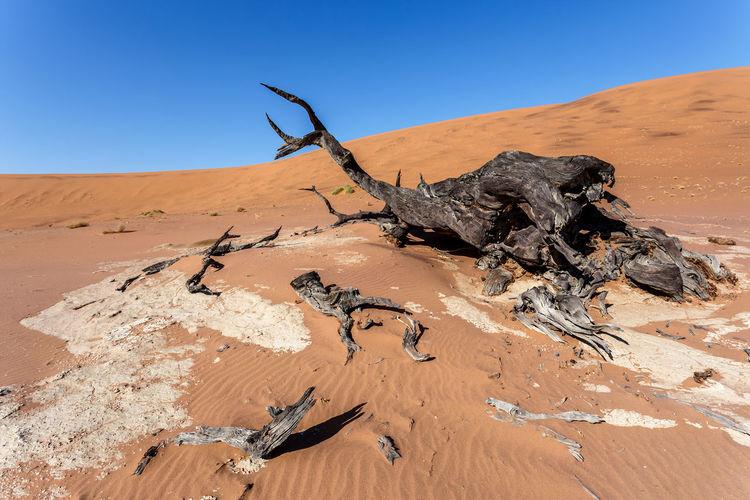 Driftwood on sand against clear sky