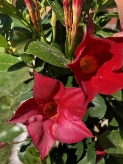 Farbenpracht Garten Pflanze Natur Pflanzenwelt Blumenpracht🌺🍃 Weinblätter Weinreben