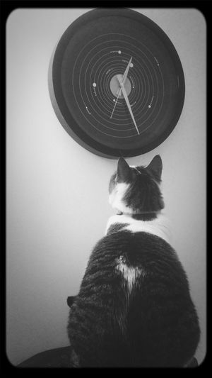 My Cat♥ What Time Is It? Saat Kaç Blackandwhite Photography