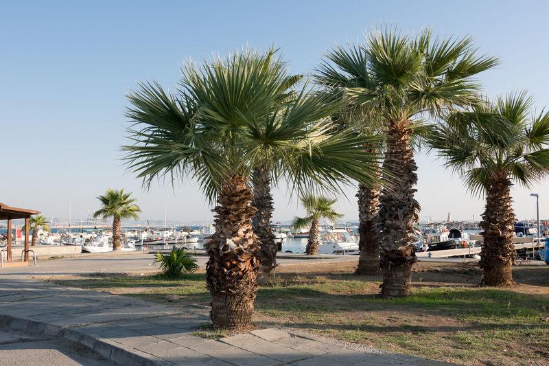 Palm trees near