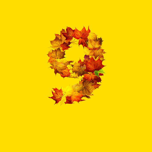 Directly above shot of autumnal leaves against yellow background