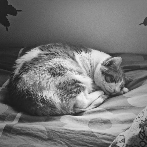 Buenas noches. Good Night ✌️ Peque y yo os deseamos buenas noches ♥️♥️