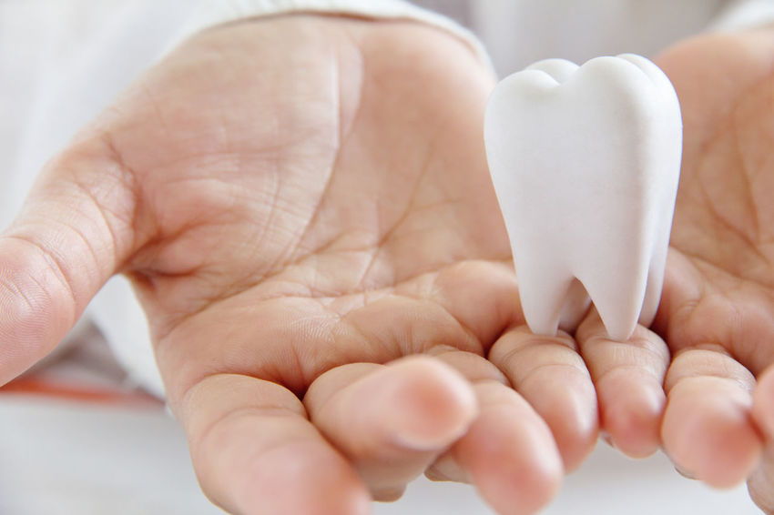 dental concept Dental Dental Hygiene Dentist Dentistry Close-up Concept Conceptual Conceptual Photography  Day Dental Care Dental Clinic Dental Equipment Dental Health Dentist Tools Health Healthcare And Medicine Healthy Human Body Part Human Hand Real People Teeth Teeth Care Teeth Model