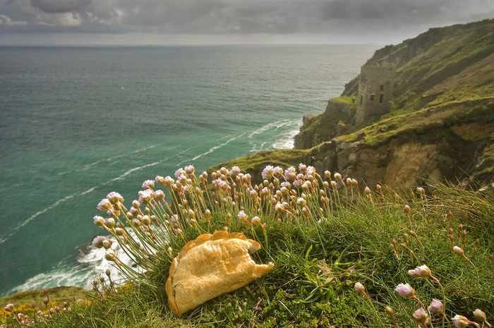 Pasty Country Beauty In Nature Cliff Coast Cornwall Fauna Grass Mullion Nature No People Pasty Plant Scenics Sea Tranquil Scene Tranquility Water Wildflowers